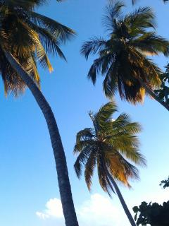 The Los Corales palm trees
