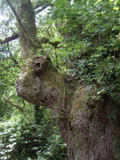 El guardían del bosque que nos protege