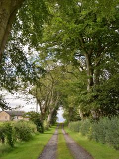 Tree lined drive to cottage