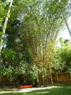 bamboo corner and orange bench