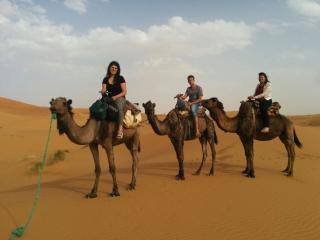 camels trekking