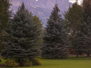 Newly renovated Teton Shadows Condo - Close to Grand Teton National Park!