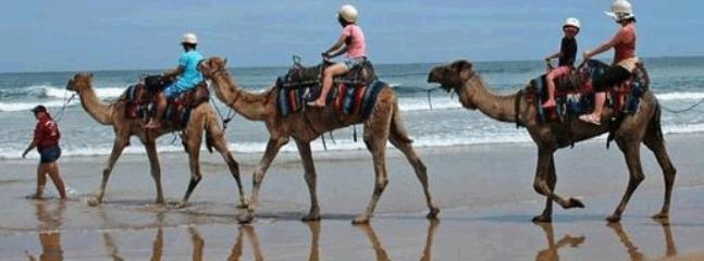 Camel riding on Birubi beach and Stockton dunes