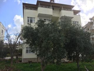 Olive Apart
