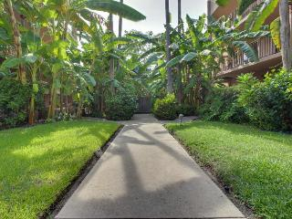 Unobstructed beach view, pool, hot tub, & tropical gardens!