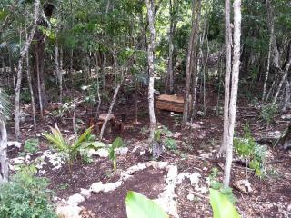 """Bungalow Jungle  """"Casa Ixchel Dos Ojos"""" Tulum"""