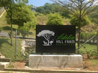 Adelia Hill Farm