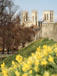 Spring flowers and York Minster