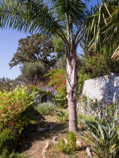 The garden with herbs, plants, roses and the two  palm trees