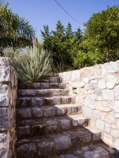 The stairs that leads at the garden with orange and lemon trees