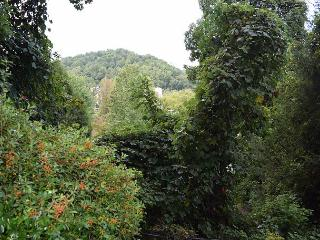 This is a 1 bedroom 1 Bath condominium.  Great Location Of Gatlinburg.