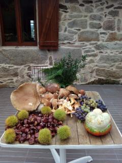 cosecha otoño