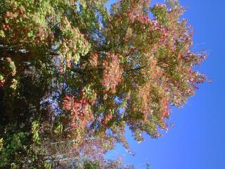 Beautiful oak trees in North Alabama