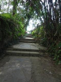 Common pathways