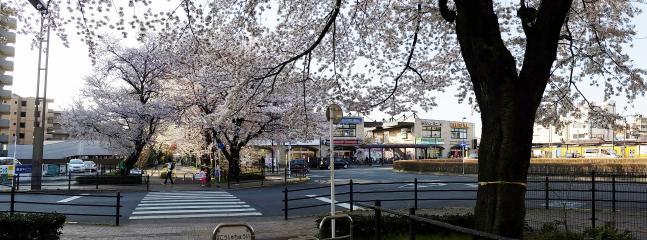 Hanakoganei station
