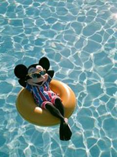Someone reported what ? ....a mouse ?.... in the pool....?!