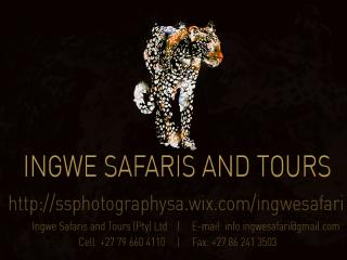 Ingwe Safaris and Tours