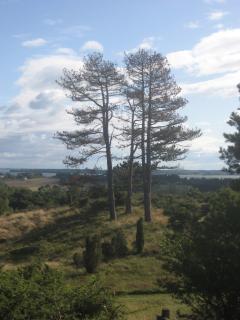 Tibirke Hills (0.5-1 km)