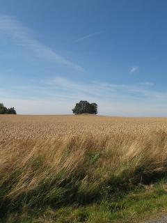 Wheat fields by Ramløse (3 km)