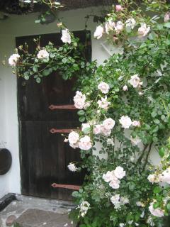 Back door to back yard