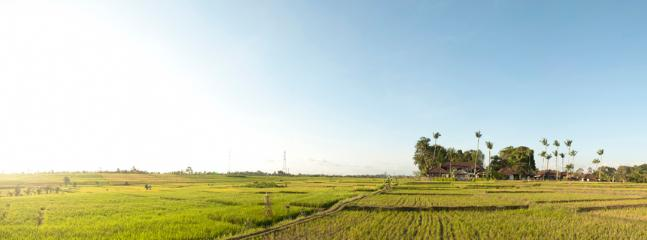 Take a walk through rice paddies or how about a bike ride?