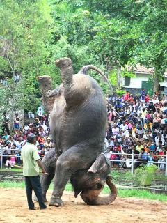 Zoological Garden - Colombo - 3Km Away