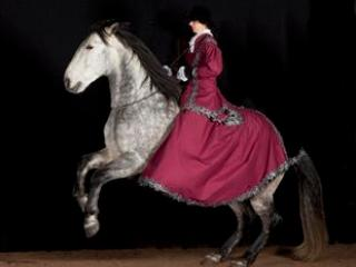 Riding school Oersberg classically Baroque horsemanship