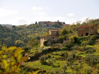 Ortensia - Ventena Vecchia Antico Frantoio