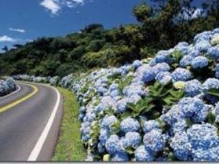 Enjoying beautiful hydrangeas every way you drive