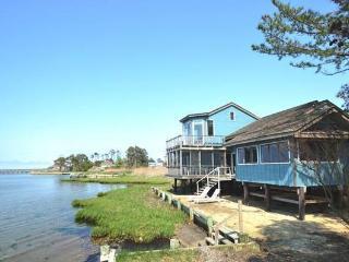 Grey Heron, Chincoteague Island