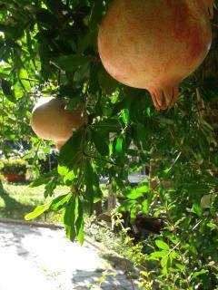 giardino con frutta di stagione