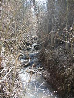 Seasonal Creek in Backyard