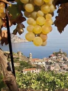 Uva, vino, sole e mare, questo è quello che troverai venedo da noi