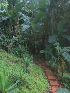 Path leads to Volcan Baru view and new greenhouse under construction.