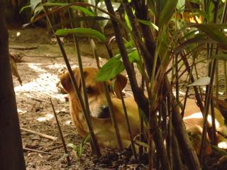 Nature Retreat with Healing Dogs in Brazil, Eco-Lodge 'Bem-Te-Vi'