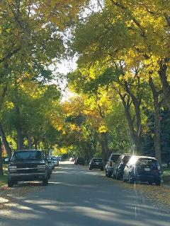 Beautiful tree-lined streets