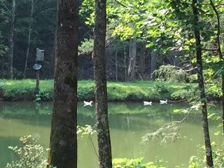 Come relax at Duck Pond Mountain Retreat w/stream & pond on 9 acres
