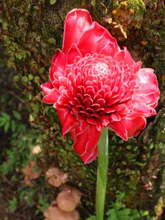 This beautiful flower is called the Emperor's scepter.