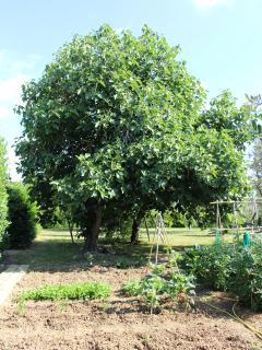 Vegtable garden at guests' disposal