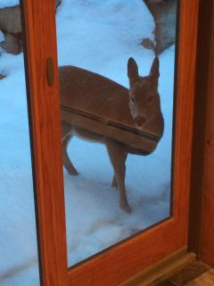 Our special visitors - nature right outside your door!