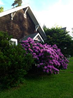 Side view of your entry and front yard area.  These flowers usually bloom in June