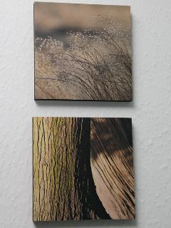 Tori Beth Landscapes on display