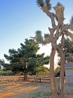 Joshua Tree in yard is sacred. Big side yard and view of the JT valley is especially nice at night.