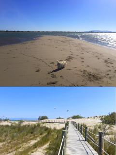Apartamento en la playa Eucaliptus Delta del Ebro