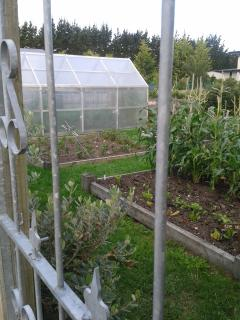 Our big vegetable garden you are welcome to view.