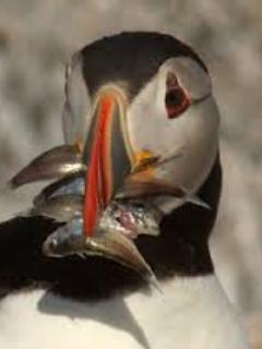 Puffin Cruises at Cpt. Fish Cruises. Also sailing trips & paddle boards in town.