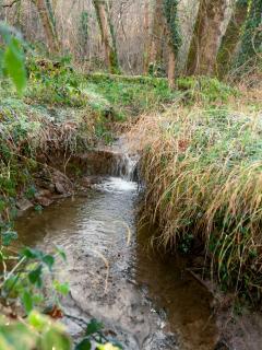 Le ruisseau qui traverse notre forêt privée
