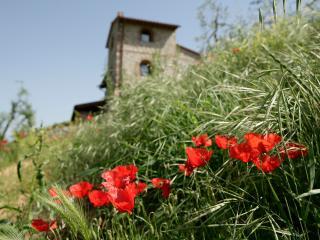 Villa Lionella near San Gimignano - Tuscany