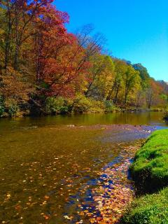Autumn Leaves On The River