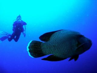 Home Holidays & Scuba Diving, Dahab